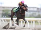 【船橋・かしわ記念】売得金15.6億円、船橋競馬の単一レース&1日当たりでの記録を更新