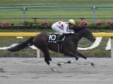 【麦秋S】(東京) ミッキーワイルドが4馬身差で完勝