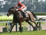 【次走】レッドアネモスはラジオNIKKEI賞を視野 牡馬混合戦で2戦2勝
