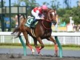 【プロキオンS】マテラスカイが連覇を狙う/JRAレースの見どころ