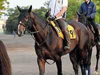 【プロキオンS】アルクトス輝く 本格化の4歳馬が重賞初Vへ