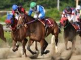 【笠松・クイーンC】連勝を重ねる地元勢、他地区からの重賞馬など10頭/地方競馬見どころ