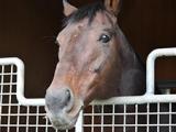 キングカメハメハが種牡馬を引退、現当歳馬が最終世代に