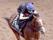 【中京記念】グルーヴィット 3馬身半先着で好調アピール 松永幹師「楽しみ」