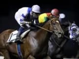 【川崎・文月オープン】赤岡修次騎手「この馬は本当に走ります」 ヤマノファイトが追い比べ制す