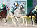 【次走】白毛重賞馬ハヤヤッコはシリウスSを視野に