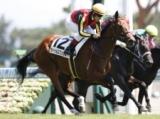 【新潟5R新馬戦】断然人気の良血馬カトゥルスフェリスがV/JRAレース結果