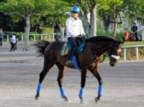 ムーンクエイク半弟クロスキーが三浦皇成騎手でデビュー/関東馬メイクデビュー情報