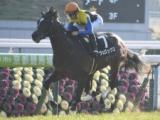 【神戸新聞杯】ヴェロックス、体質強化で春よりすごみ増す/有力馬1週前調教リポート