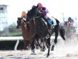 【YJS・TR笠松第1戦】兵庫の田村直也騎手が1番人気ウッドカービングで勝利!/地方競馬レース結果