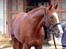 シュヴァルグラン 有馬記念で引退へ「よく頑張ってくれた」