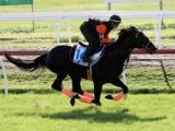 【豪州競馬】クルーガー、メールドグラースがそれぞれ順調に追い切りを行う