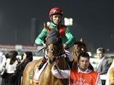 新種牡馬アニマルキングダムを日本軽種馬協会が導入