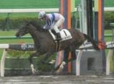【京都4R新馬戦】ラーラクロリが逃げ切り新馬勝ち/JRAレース結果