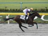 【東京4R新馬戦】2番人気のコードジェニックが好位から押し切り新馬勝ち/JRAレース結果