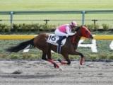 【東京6R新馬戦】デュードヴァンが人気に応え快勝/JRAレース結果
