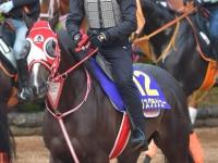 リスグラシュー次走は有馬記念へ 矢作師「アーモンドアイと戦ってみたい」