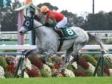 【京都ジャンプS】登録馬 マイネルフィエスタ、ミヤジタイガなど13頭