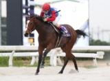 【笠松・ラブミーチャン記念】北海道のテーオーブルベリーが逃げ切りV/地方競馬レース結果