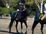 ダノンキングリー、マイルCS 1週前厩舎情報/美浦トレセンニュース