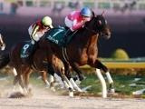 【次走】武蔵野S優勝のワンダーリーデルはチャンピオンズCへ 引き続き横山典弘騎手