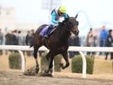 【クイーン賞】(船橋、12月11日) JRA所属の出走予定馬および補欠馬について