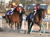 【チャンピオンズC】秋のダート王決定戦、あの馬の戴冠を期待/JRAレース展望