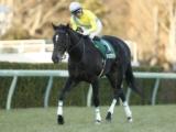 【中日新聞杯】混戦模様の芝中距離ハンデ重賞/JRAレースの見どころ