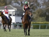 【次走】アルアインは有馬記念をラストランに種牡馬入り