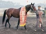 【有馬記念】シンザンからキタサンまで…レース映像で振り返る名勝負10選!
