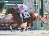 【中山4R新馬戦】トウカイエトワールが好位から押し切り初陣飾る/JRAレース結果