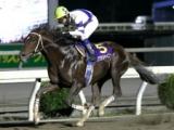 【地方競馬】14歳サクラシャイニーが引退 重賞9勝、通算76戦22勝