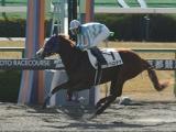 【京都3R新馬戦】スペロデアが好位から抜け出し3馬身差快勝/JRAレース結果