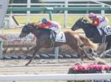 【中山4R新馬戦】ペイシャチャームが外から差し切りデビュー勝ち/JRAレース結果
