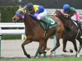【京都牝馬S】サウンドキアラの重賞連勝なるか/JRAレースの見どころ