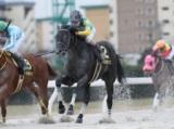 【フェブラリーS】好走条件に合うあの馬に期待したい/JRAレース展望