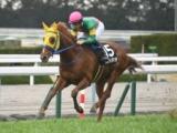【ダイヤモンドS】ステイヤーとしての素質高いあの馬に期待/JRAレース展望