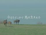 映画「今日もどこかで馬は生まれる」 期間限定でDVDが発売中