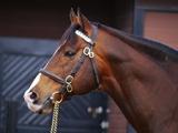 【地方競馬】新種牡馬ディスクリートキャットの本邦初年度産駒が初出走初勝利