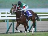 【NHKマイルC】登録馬 レシステンシア、タイセイビジョンなど22頭