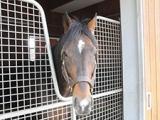 【NHKマイルC・豆知識】ディープインパクト後継種牡馬から初のGI馬誕生、リアルインパクト産駒ラウダシオンがV