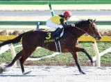 【ジャパンダートダービー】(7月8日、大井) JRA所属の出走予定馬および補欠馬について