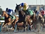 【次走】コパノキッキングは武豊騎手と新コンビでサマーチャンピオンへ