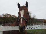 【JRA】ハクサンムーン産駒初出走、土曜札幌5Rのゲノム