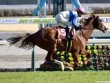 【せきれい賞展望】盛岡芝2400mでこそ輝くのはどの馬か!?/NARレース展望