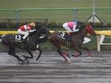 【JRA】秋季競馬番組が決定 3歳上OPの新潟牝馬S、2歳ダートOPのカトレアS実施など
