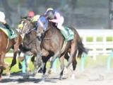 メイショウスミトモが引退、馬事公苑で乗馬となる予定