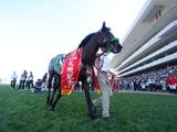 【札幌記念想定】ラッキーライラック、ノームコア、マカヒキ…今年も北の大地でGI馬たちが競演