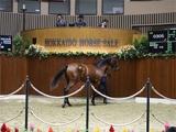【サマーセール3日目】全兄が4日前に新馬戦を圧勝 「ペブルガーデンの2019」が最高価格