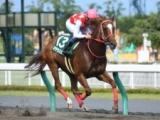 【次走】マテラスカイは3年ぶりルメール騎手とのコンビで東京盃